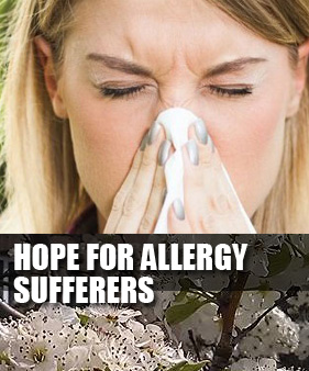 Allergy Sufferers - Health and Healing - Ann Arbor, Michigan - Hope for Allergy Sufferers