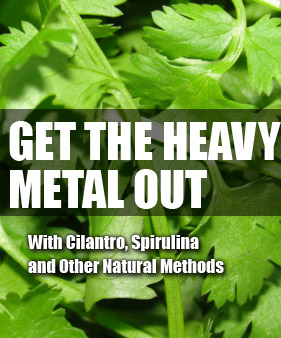 Getting Heavy Metals Out Of The Body - Detoxify Your Body With Cilantro